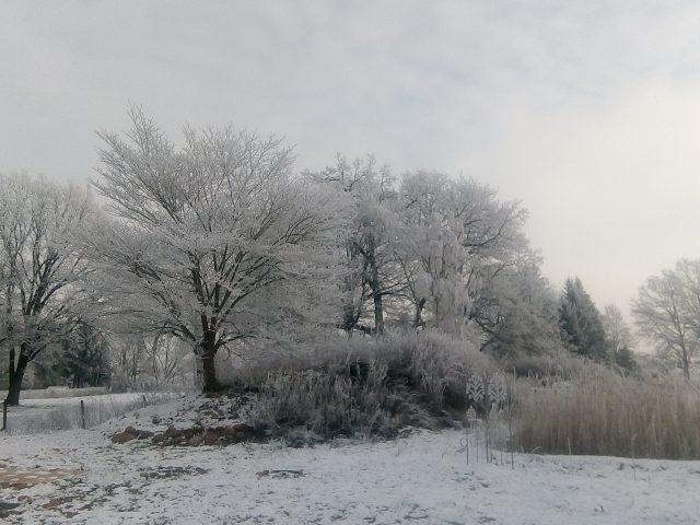 Garten im Winter_1